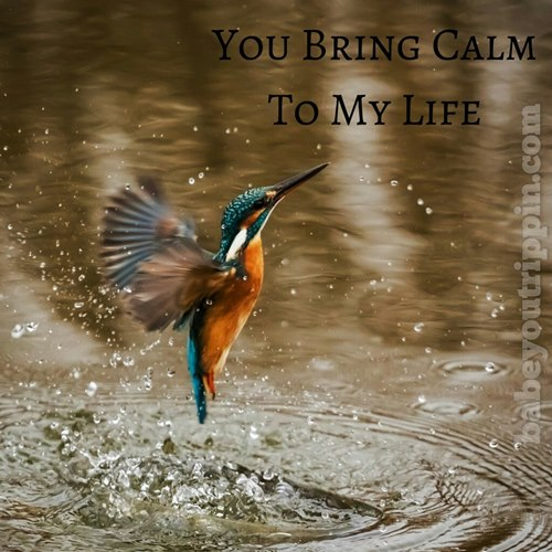 You_Bring_Calm_To_My_Life_BYT_Quote